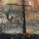 Rare Rustic Hardwood
